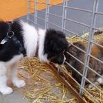 Lamo und Kaninchen 1