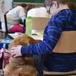 schulhund-miro