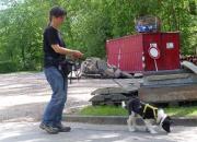 Hund bei der Verfolgung einer Geruchsspur