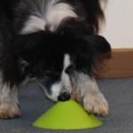 Hund schnüffelt an verschiedenen Abdeckungen