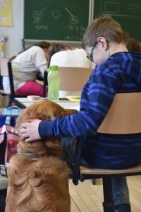 Schulhund Miro